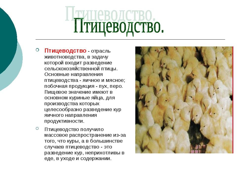 Птицеводство - отрасль животноводства, в задачу которой входит разведение сел...