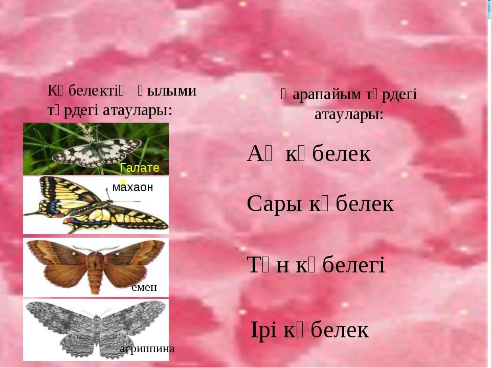 Көбелектің ғылыми түрдегі атаулары: Қарапайым түрдегі атаулары: Галатея махао...