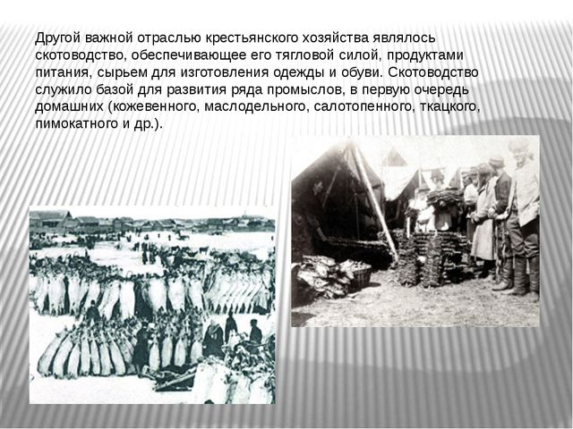 Другой важной отраслью крестьянского хозяйства являлось скотоводство, обеспеч...