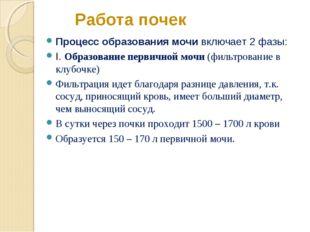 Работа почек Процесс образования мочи включает 2 фазы: I. Образование первичн