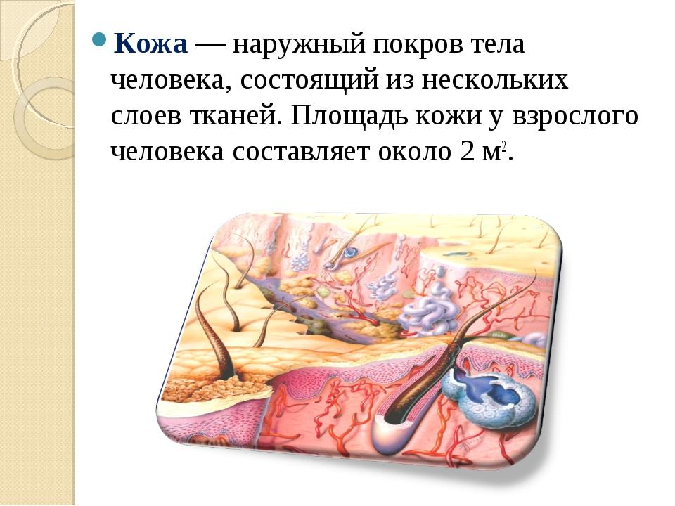 Кожа — наружный покров тела человека, состоящий из нескольких слоев тканей. П...