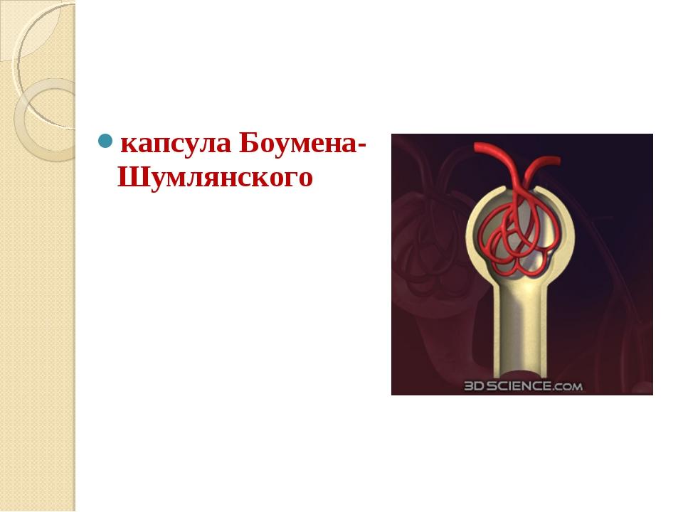 капсула Боумена-Шумлянского