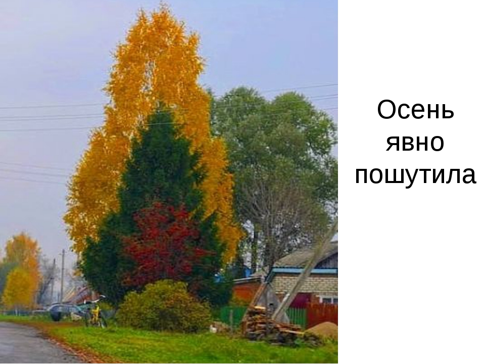Осень явно пошутила
