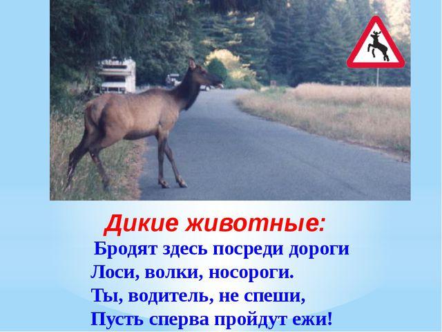 Бродят здесь посреди дороги Лоси, волки, носороги. Ты, водитель, не спеши,...