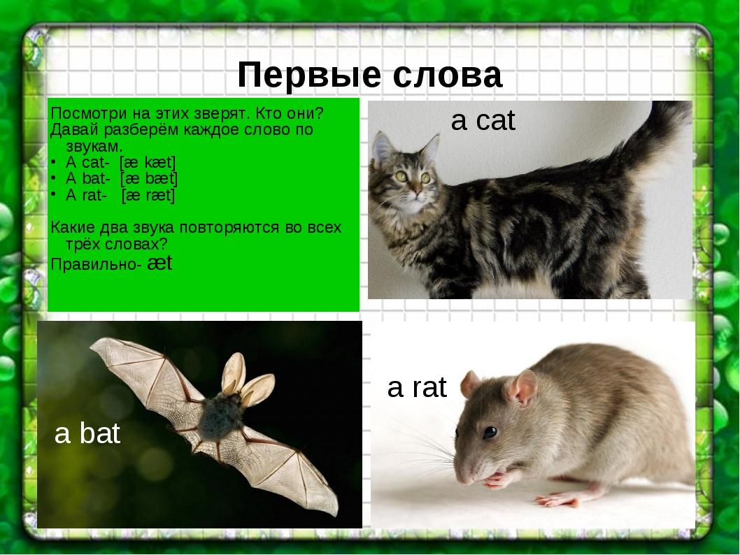 Первые слова a cat a rat a bat Посмотри на этих зверят. Кто они? Давай разбер...