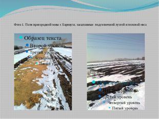 Фото 1. Поля пригородной зоны г. Барнаула, засыпанные подсолнечной лузгой и