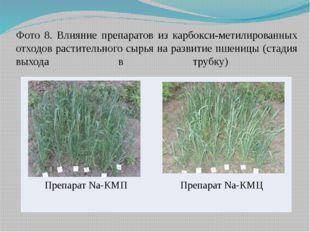 Фото 8. Влияние препаратов из карбокси-метилированных отходов растительного с