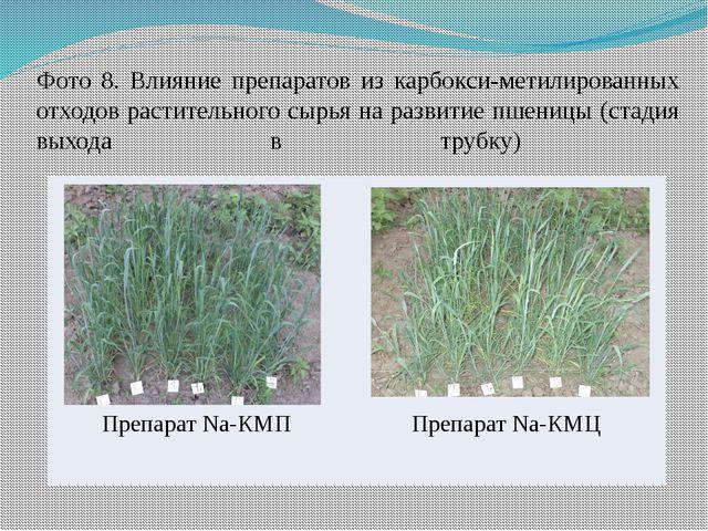 Фото 8. Влияние препаратов из карбокси-метилированных отходов растительного с...