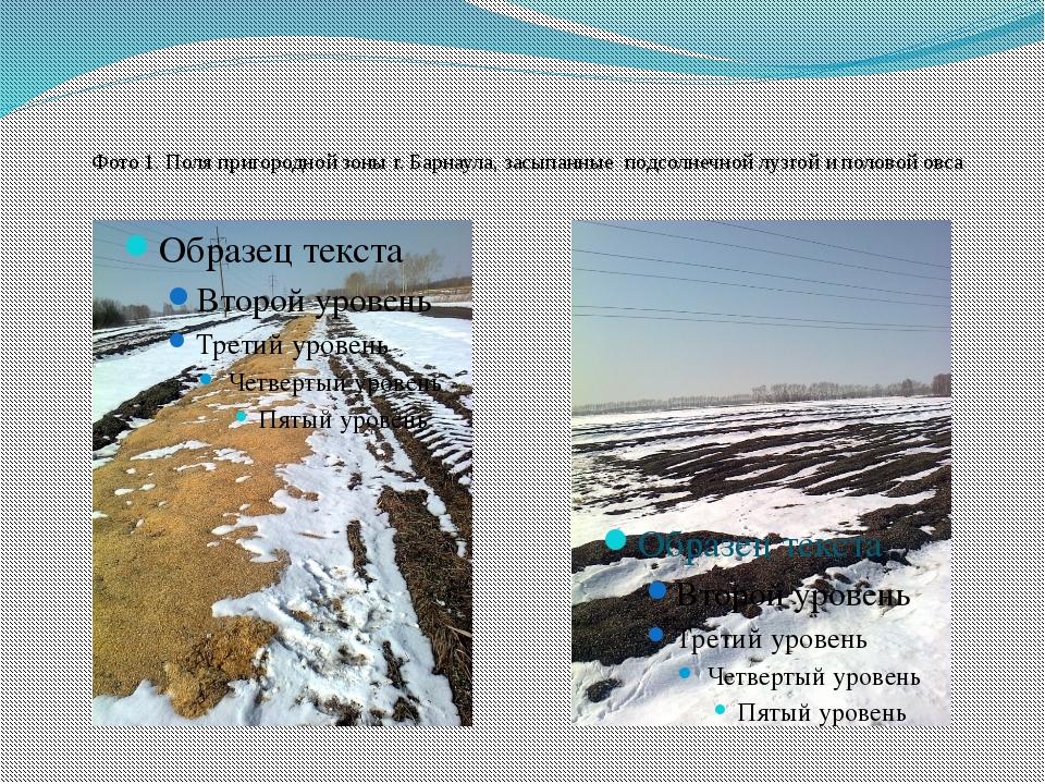 Фото 1. Поля пригородной зоны г. Барнаула, засыпанные подсолнечной лузгой и...