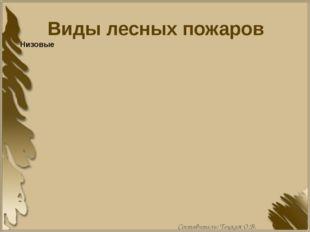 Виды лесных пожаров Составитель: Тоцкая О.В.