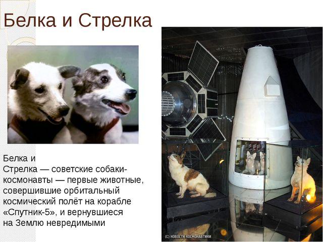 Белка и Стрелка Белка и Стрелка—советскиесобаки-космонавты— первые живот...