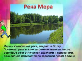 Мера – живописная река, впадает в Волгу. Протекает река в зоне широколиственн