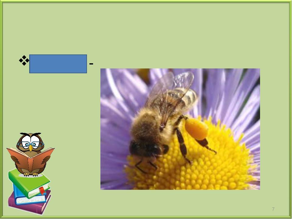 Пыльца - *