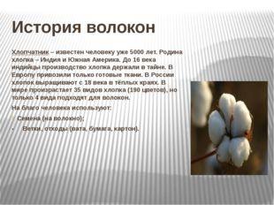 История волокон Хлопчатник – известен человеку уже 5000 лет. Родина хлопка –