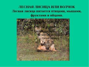ЛЕСНАЯ ЛИСИЦА ИЛИ ВОЛЧОК Лесная лисица питается птицами, мышами, фруктами и я