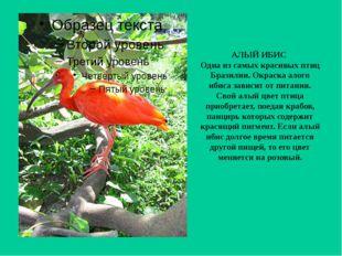 АЛЫЙ ИБИС Одна из самых красивых птиц Бразилии. Окраска алого ибиса зависит о