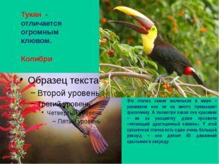 Колибри Эта птичка самая маленькая в мире – размером она не на много превышае