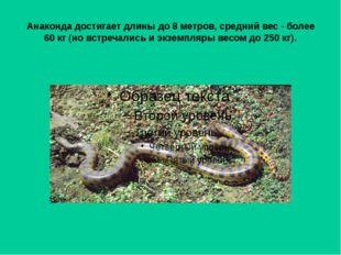 Анаконда достигает длины до 8 метров, средний вес - более 60 кг (но встречали