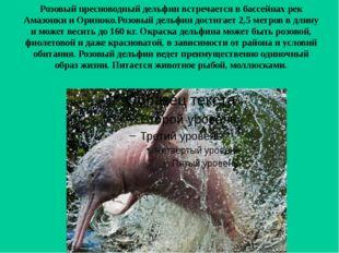 Розовый пресноводный дельфин встречается в бассейнах рек Амазонки и Ориноко.Р