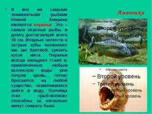 Амазонка И все же самыми знаменитыми рыбами Южной Америки являются пираньи. Э