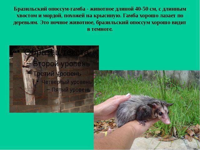 Бразильский опоссум-гамба - животное длиной 40-50 см, с длинным хвостом и мор...
