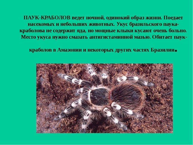 ПАУК-КРАБОЛОВ ведет ночной, одинокий образ жизни. Поедает насекомых и небольш...