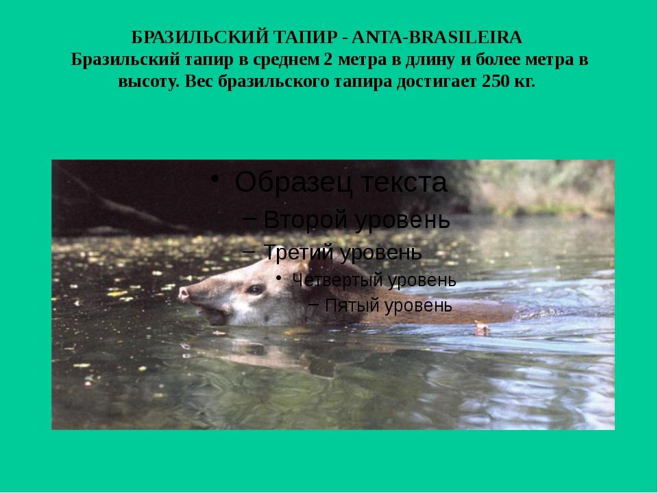 БРАЗИЛЬСКИЙ ТАПИР - ANTA-BRASILEIRA Бразильский тапир в среднем 2 метра в дл...