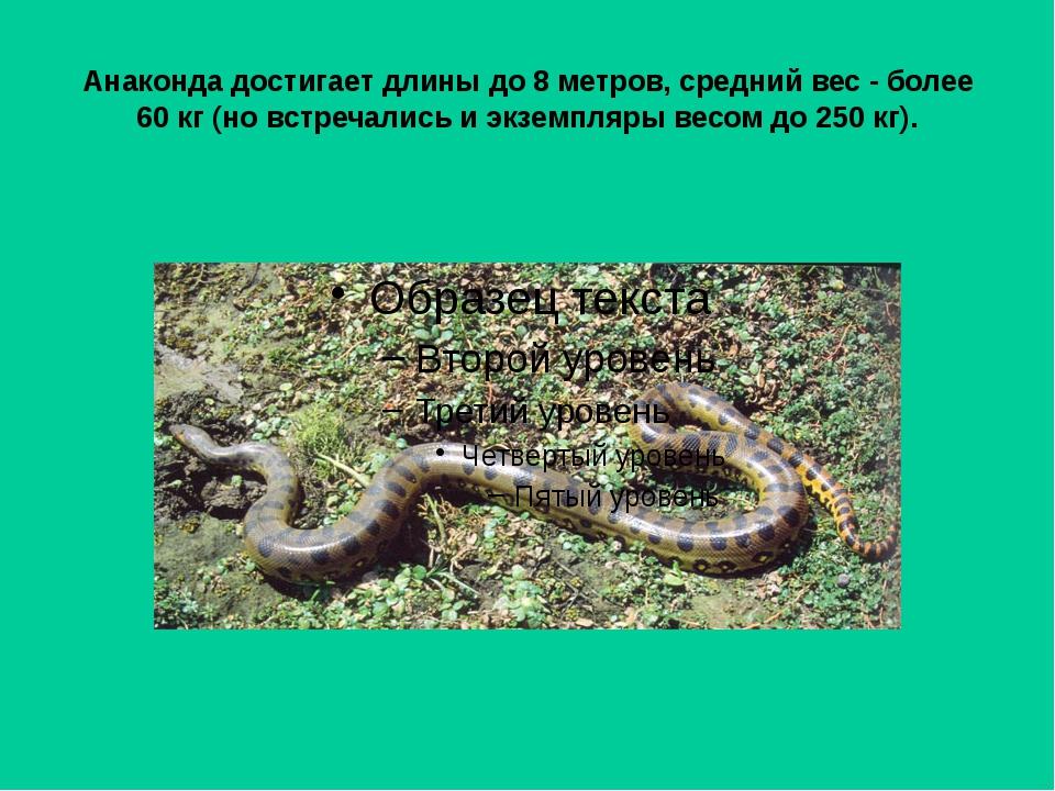 Анаконда достигает длины до 8 метров, средний вес - более 60 кг (но встречали...