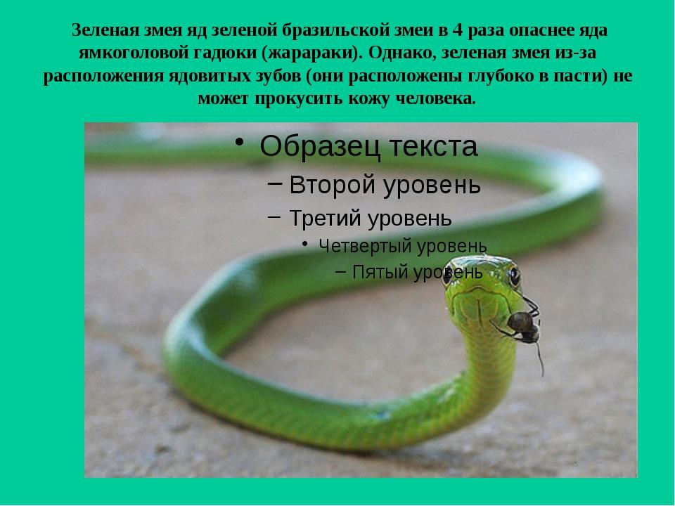 Зеленая змея яд зеленой бразильской змеи в 4 раза опаснее яда ямкоголовой га...