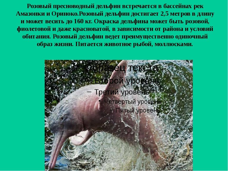 Розовый пресноводный дельфин встречается в бассейнах рек Амазонки и Ориноко.Р...