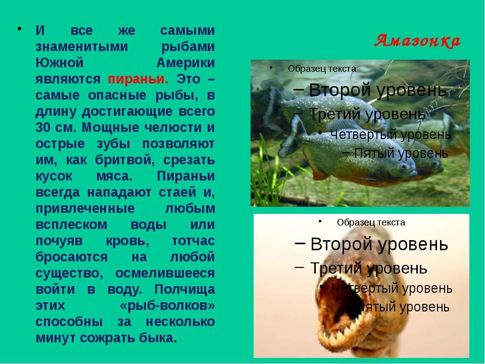 Амазонка И все же самыми знаменитыми рыбами Южной Америки являются пираньи. Э...