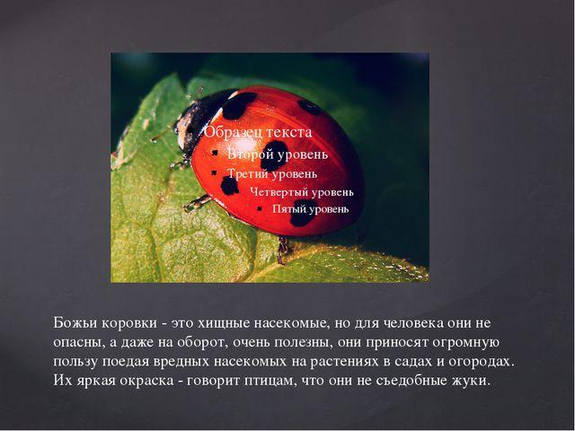 Божьи коровки - это хищные насекомые, но для человека они не опасны, а даже н...