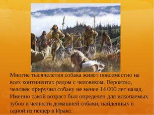 Многие тысячелетия собака живет повсеместно на всех континентах рядом с челов