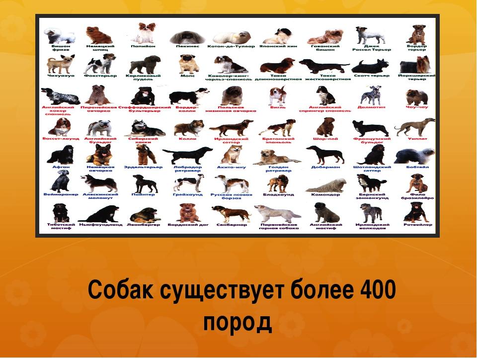 Собак существует более 400 пород