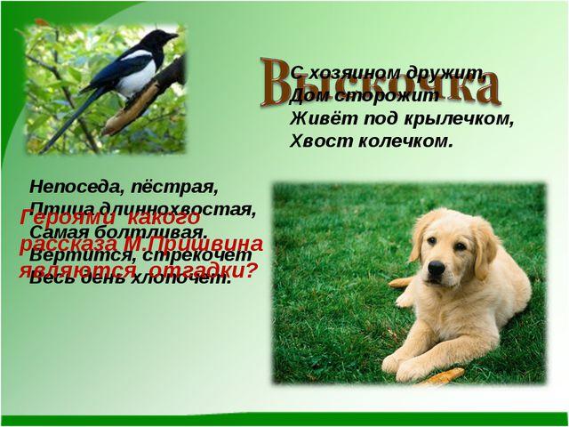 Непоседа, пёстрая, Птица длиннохвостая, Самая болтливая. Вертится, стрекочет...