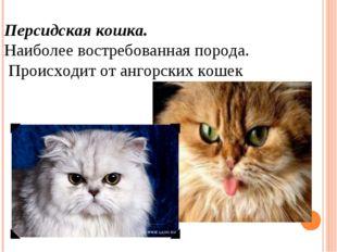 Персидская кошка. Наиболее востребованная порода. Происходит от ангорских ко