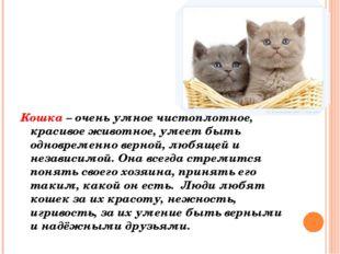 Кошка – очень умное чистоплотное, красивое животное, умеет быть одновременно