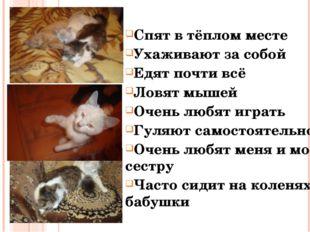 Спят в тёплом месте Ухаживают за собой Едят почти всё Ловят мышей Очень любят