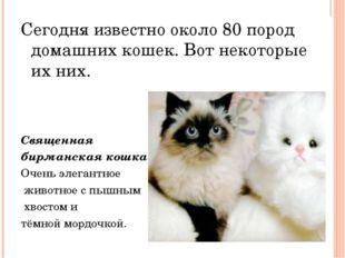Сегодня известно около 80 пород домашних кошек. Вот некоторые их них. Священ