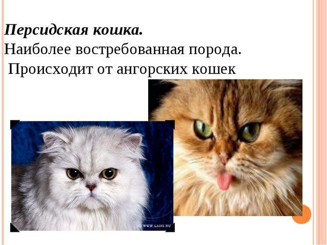 Персидская кошка. Наиболее востребованная порода. Происходит от ангорских ко...