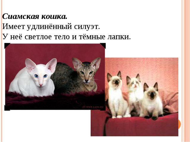 Сиамская кошка. Имеет удлинённый силуэт. У неё светлое тело и тёмные лапки.