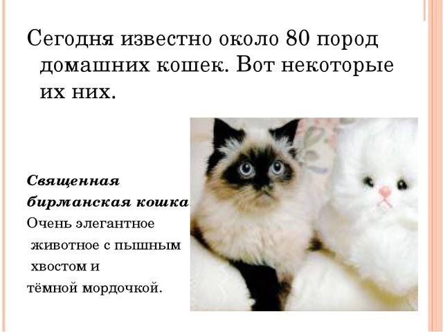 Сегодня известно около 80 пород домашних кошек. Вот некоторые их них. Священ...