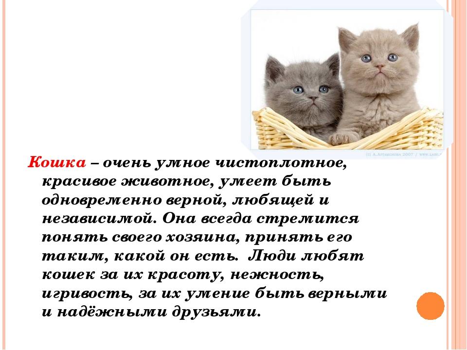 Кошка – очень умное чистоплотное, красивое животное, умеет быть одновременно...