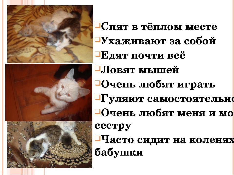 Спят в тёплом месте Ухаживают за собой Едят почти всё Ловят мышей Очень любят...