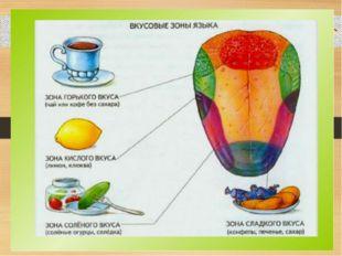 Совместное открытие знаний – Определите, с чем бутерброды. – Какой орган вам
