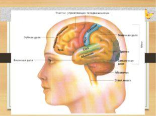 Совместное открытие знаний – Почему мозг не путает сигналы от разных органов