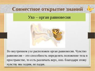 Совместное открытие знаний Во внутреннем ухе расположен орган равновесия. Чу