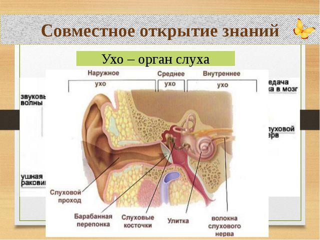 Совместное открытие знаний Ухо – орган слуха