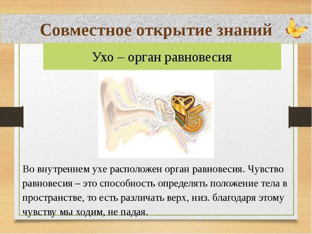 Совместное открытие знаний Во внутреннем ухе расположен орган равновесия. Чу...