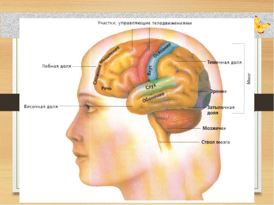 Совместное открытие знаний – Почему мозг не путает сигналы от разных органов...